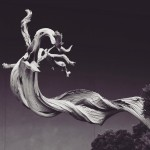 omiya-bonsai-museum-28