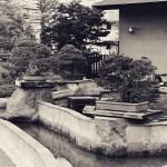 omiya-bonsai-museum-29