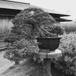 omiya-bonsai-museum-30