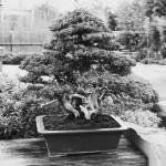 omiya-bonsai-museum-31