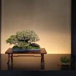 omiya-bonsai-museum-34