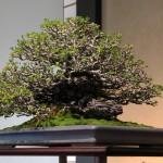 omiya-bonsai-museum-35