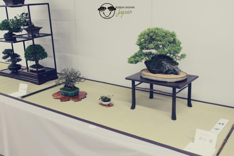 page d'accueil de bonsai shohin