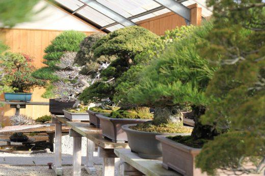 taikan museum shinji suzuki